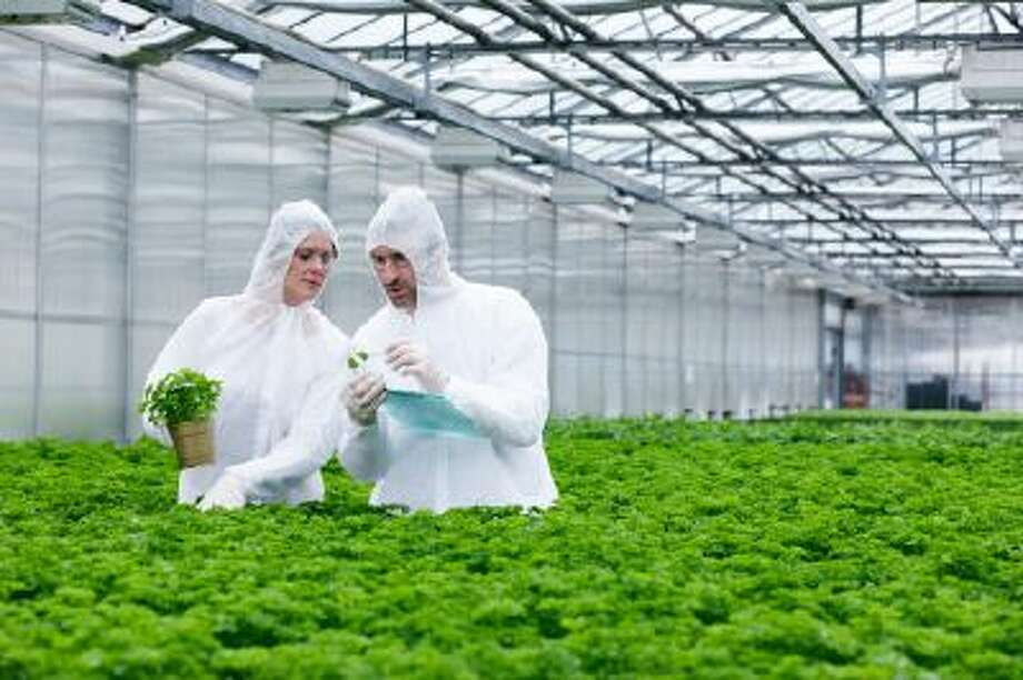 Germany, Bavaria, Munich, Scientists in greenhouse examining parsley plant. Photo: Getty Images/Brand X / Brand X