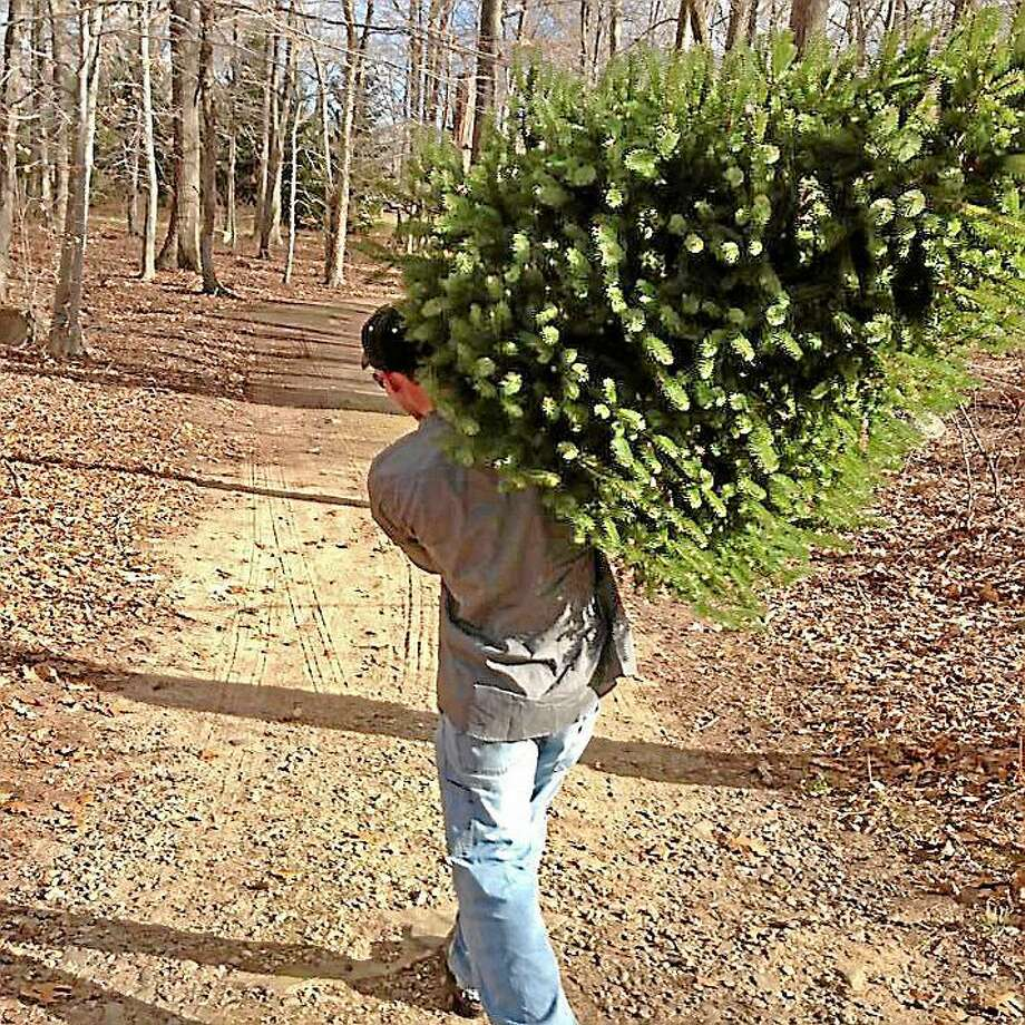 Christmas tree pickup is ongoing in Middletown, weather permitting. Photo: File Photo