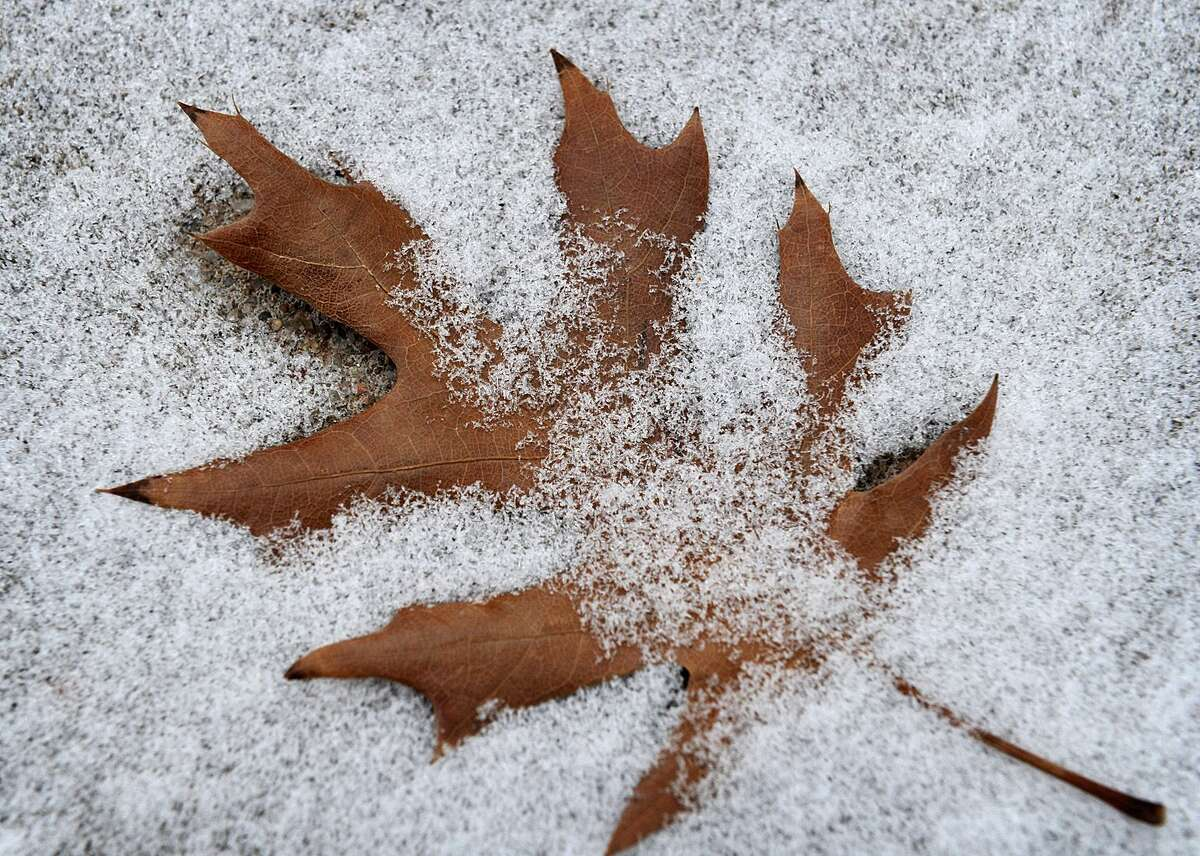 An oak leaf lies in the snow Wednesday in Wichita Falls, Texas. A wintry mix is also forecast for southern New England.
