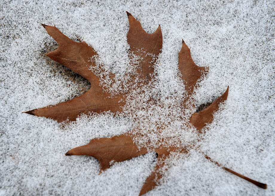An oak leaf lies in the snow Wednesday in Wichita Falls, Texas. A wintry mix is also forecast for southern New England. Photo: (AP Photo/Times Record News, Torin Halsey) / Times Record News