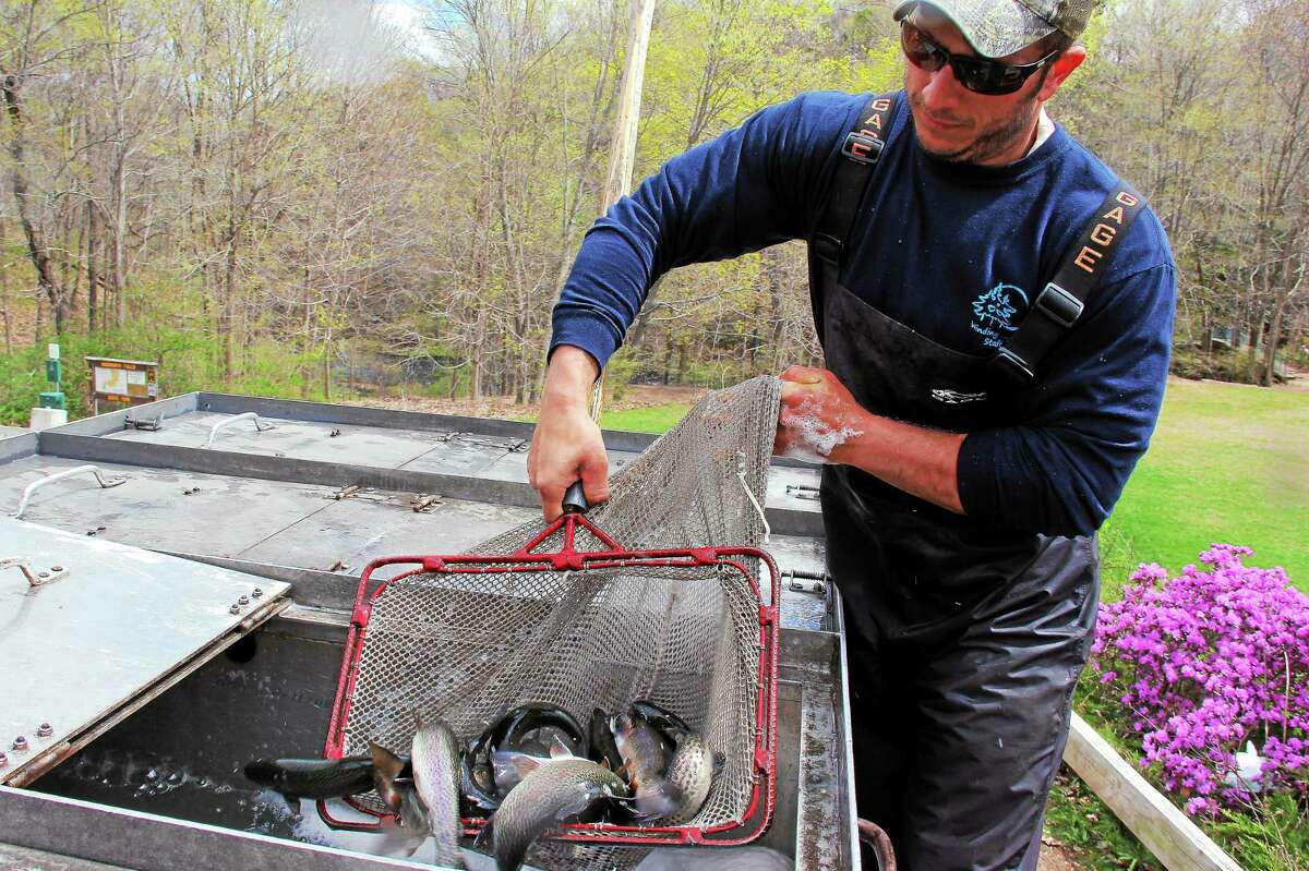 Connecticut Department of Energy and Environmental Protection employee Dave Mancini nets trout on Friday to stock the Coginchaug River at Wadsworth Falls State Park in Middlefield.