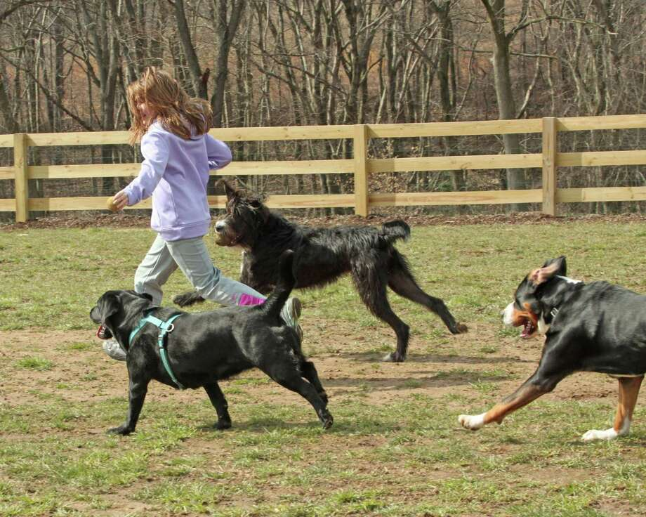 Brook of Avondale runs with the dogs in the park. Photo by Chris Barber