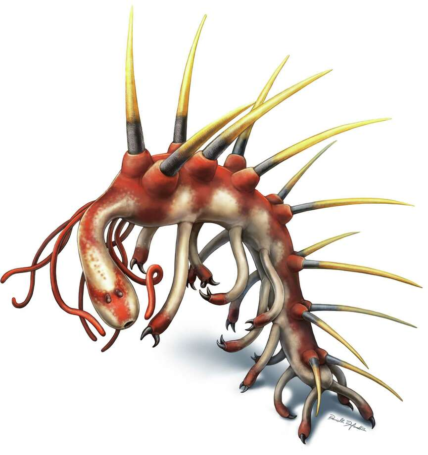This image provided by Danielle Dufault shows a rendering of a Hallucigenia sparsa worm which lived 508 million years ago. Up to 2 inches long, it had legs, and spiky spines on its back. Scientists first described the creature in 1977, and for 15 years they thought those spines were legs. The question of which end was the front has lingered even longer. But Martin Smith of Cambridge University and a Canadian colleague reveal its head in the Thursday, June 25, 2015 issue of the journal Nature. (Danielle Dufault via AP) Photo: AP / Danielle Dufault