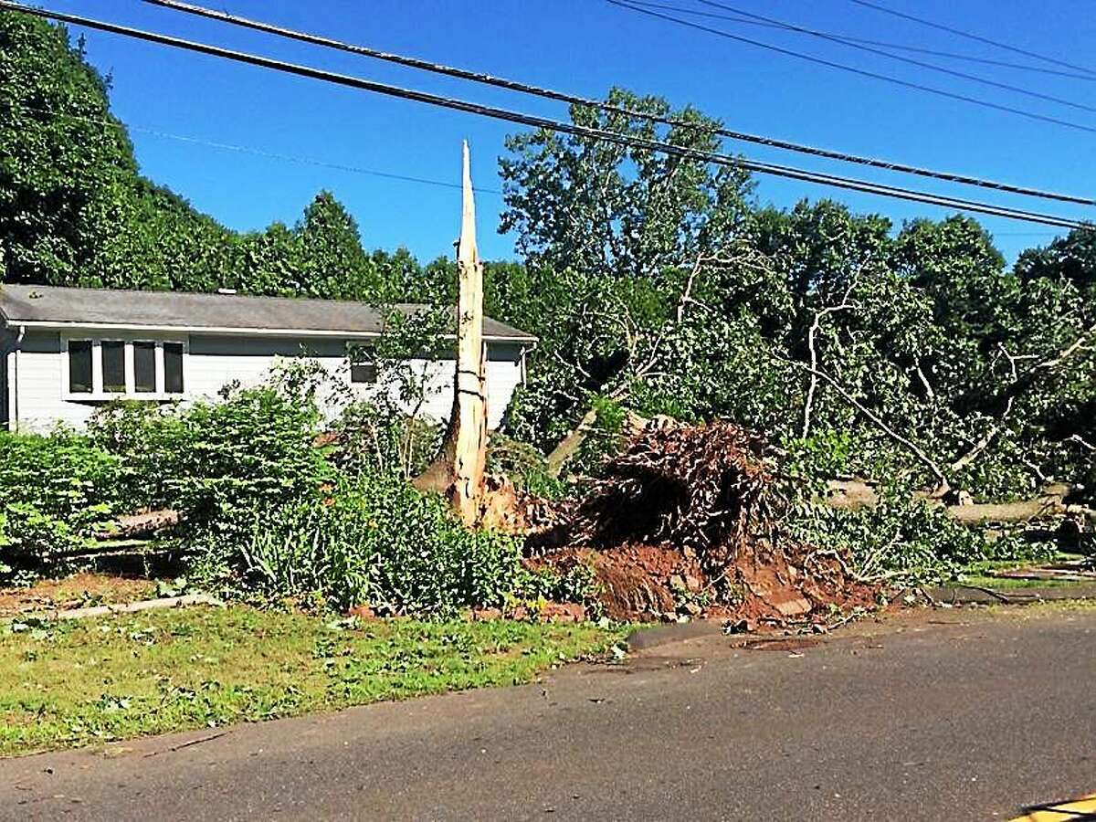 (Wes Duplantier--New Haven Register) Crews work to remove a large tree that was uprooted along Hartford Turnpike in North Haven during severe storms Tuesday, June 23, 2015.