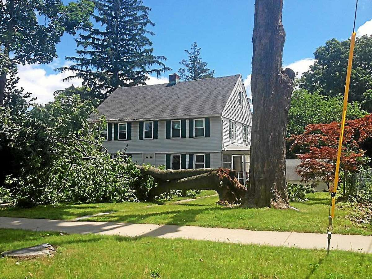 On Wednesday morning, a giant tree on the corner of Cottage Street and South Main Street in Middletown that fell dangerously close to a home, prompted a little rubbernecking.