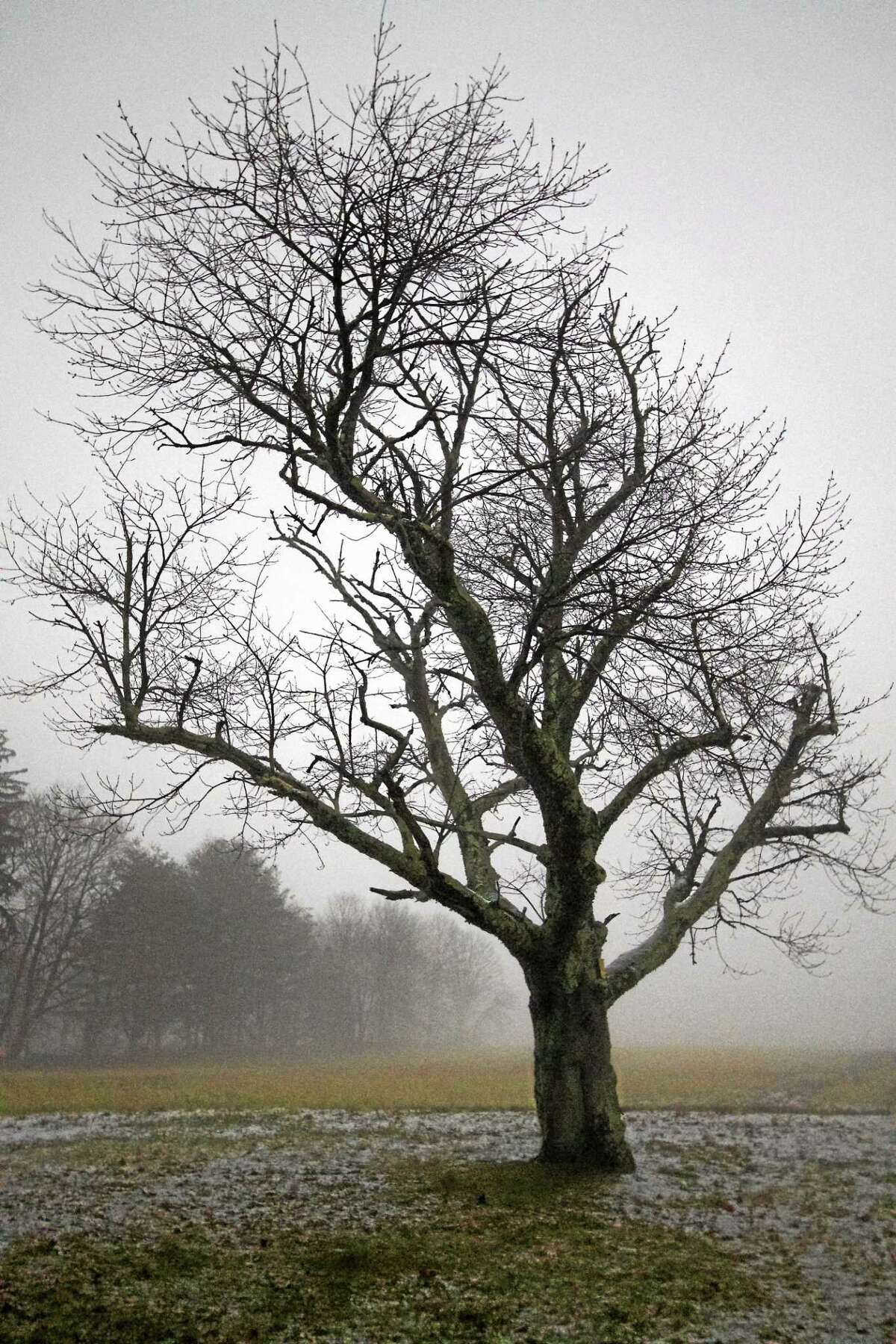 Contributed photo Works by Jenny Misseri will be featured in July at the Buttonwood Tree in Middletown.