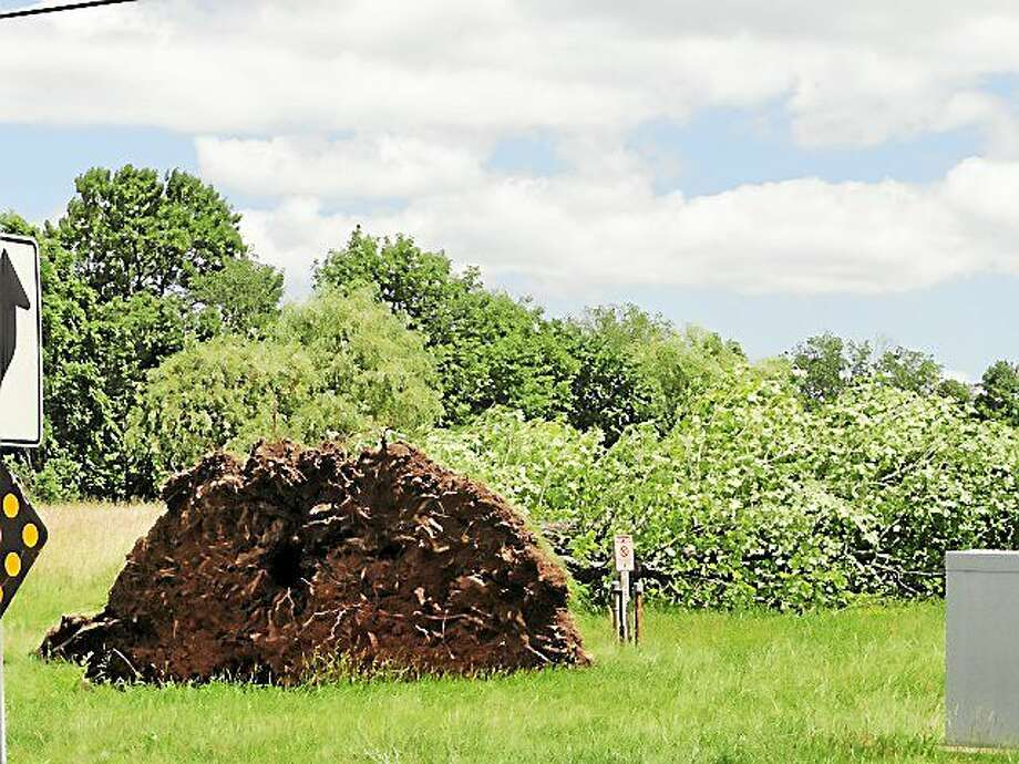 This tree was ripped up at the roots on Route 17 at Higganum Road in Durham during Tuesday's thunderstorm. Fortunately this monster fell onto the field rather than across the roadway. Photo: Cassandra Day — The Middletown Press