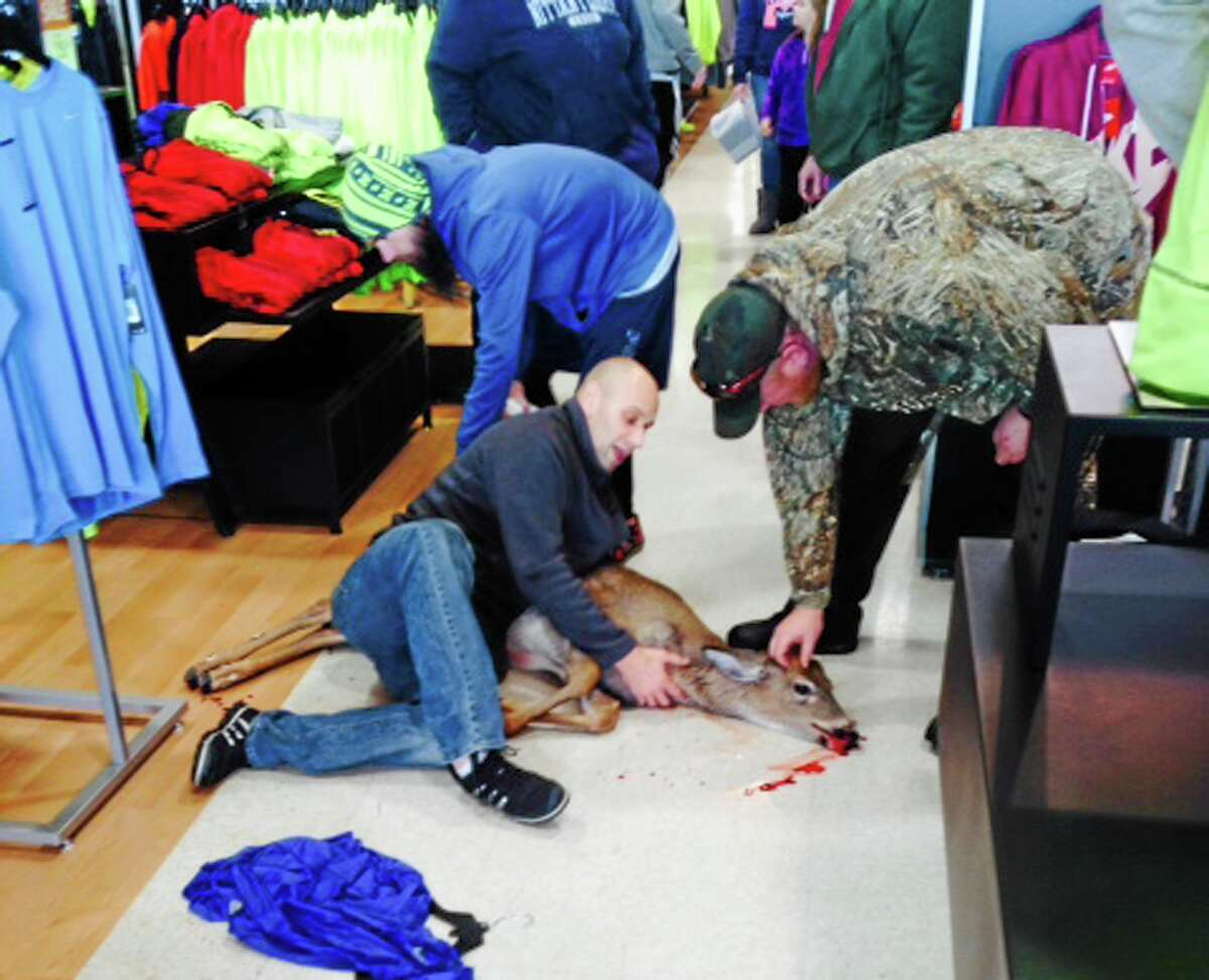 This photo provided courtesy of Eric Shemanski shows a deer on the floor after it was tackled to the ground after walking into a sporting goods store, Thursday, Dec. 26, 2013, in Reading, Pa. Store manager Brad Meyer says the deer slipped on the floor and a customer tackled it to the ground, preventing any injuries to customers or damage to the store. The store called the Pennsylvania Game Commission, which arrived and removed the deer. There's no word on where the deer was released. (AP Photo/Eric Shemanski) MANDATORY CREDIT