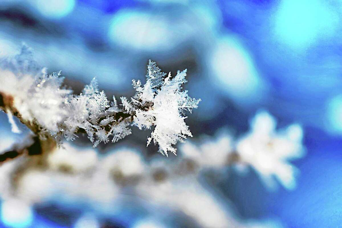 Branch tip with snowflakes