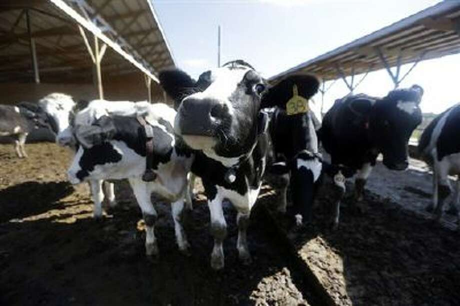 Dairy cows on a farm in Okawville, Ill., are shown in this photo. (AP Photo/Jeff Roberson) Photo: AP / AP