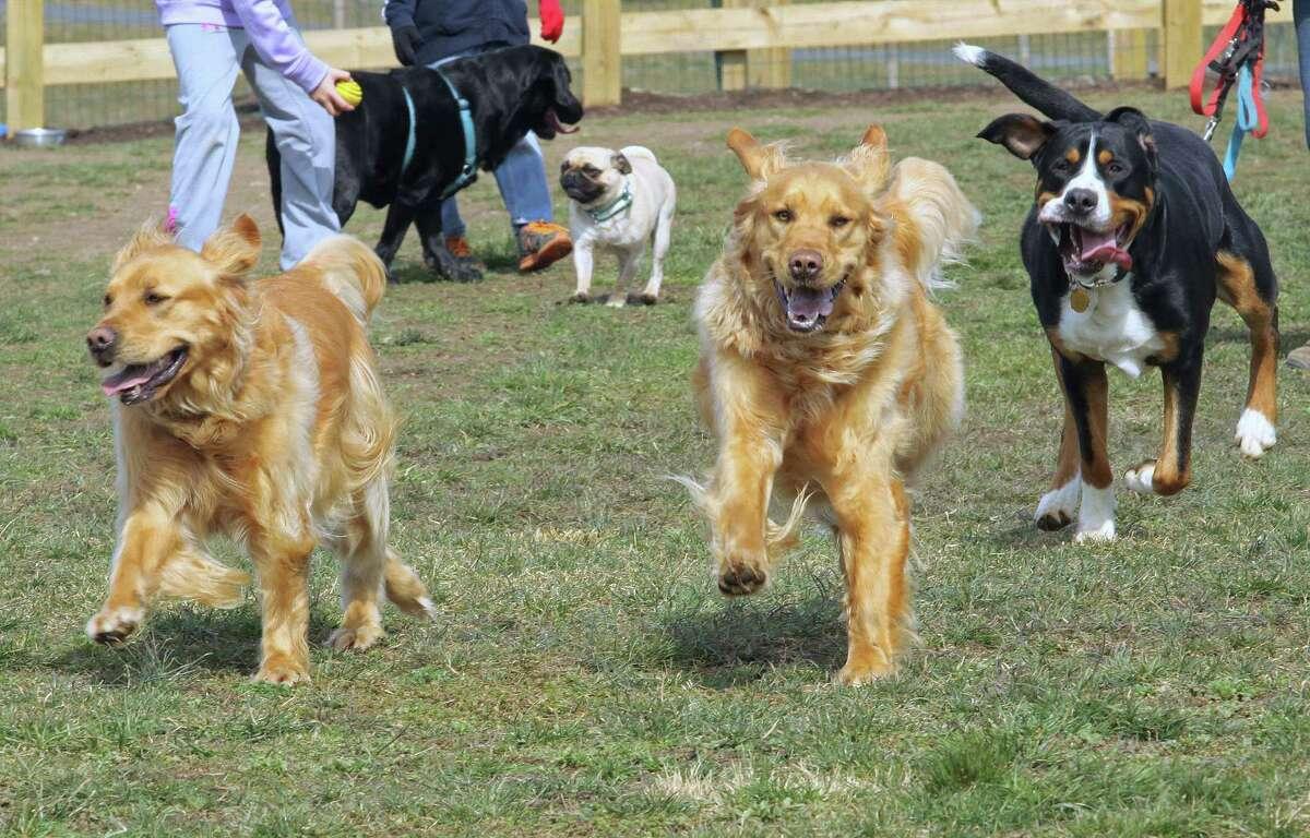 Dogs enjoy a run in the bark park on Sunday. ¬ Photo by Chris Barber