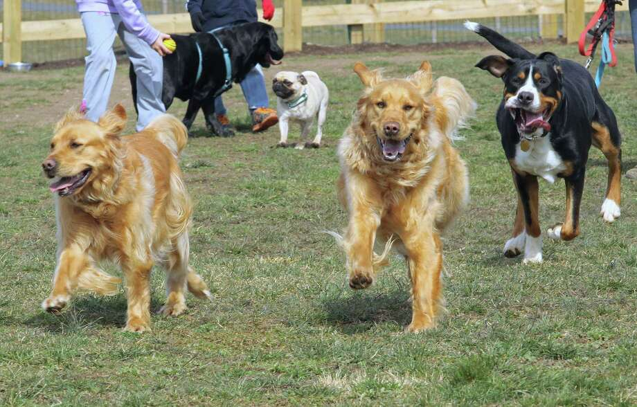 Dogs enjoy a run in the bark park on Sunday. ¬ Photo by Chris Barber