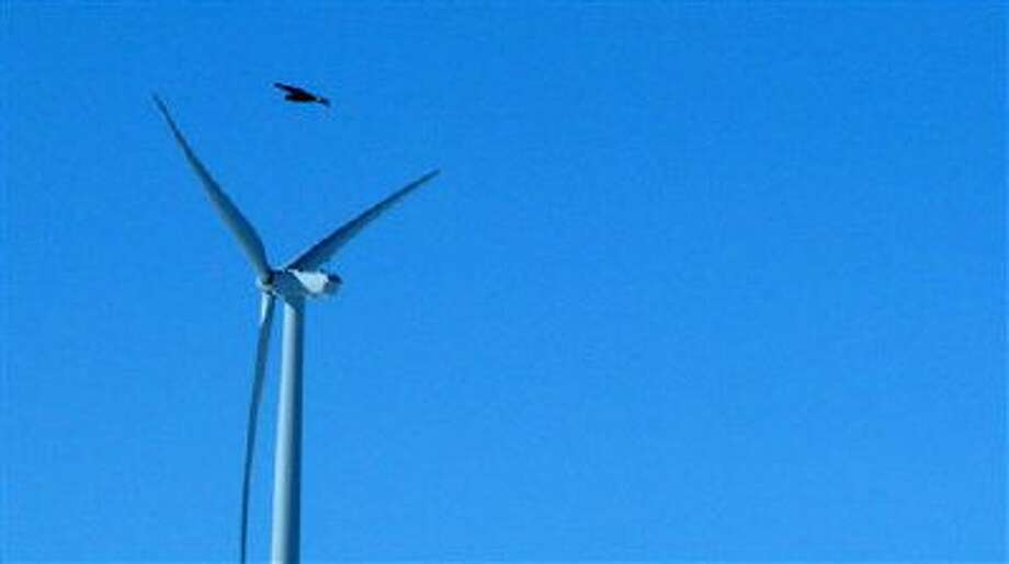 A golden eagle flies over a wind turbine at a wind farm in Converse County Wyo. The Obama administration will allow companies to seek authorization to kill and harm bald and golden eagles for up to 30 years without penalty in an effort to balance some of the environmental trade-offs of green energy. Photo: AP / AP