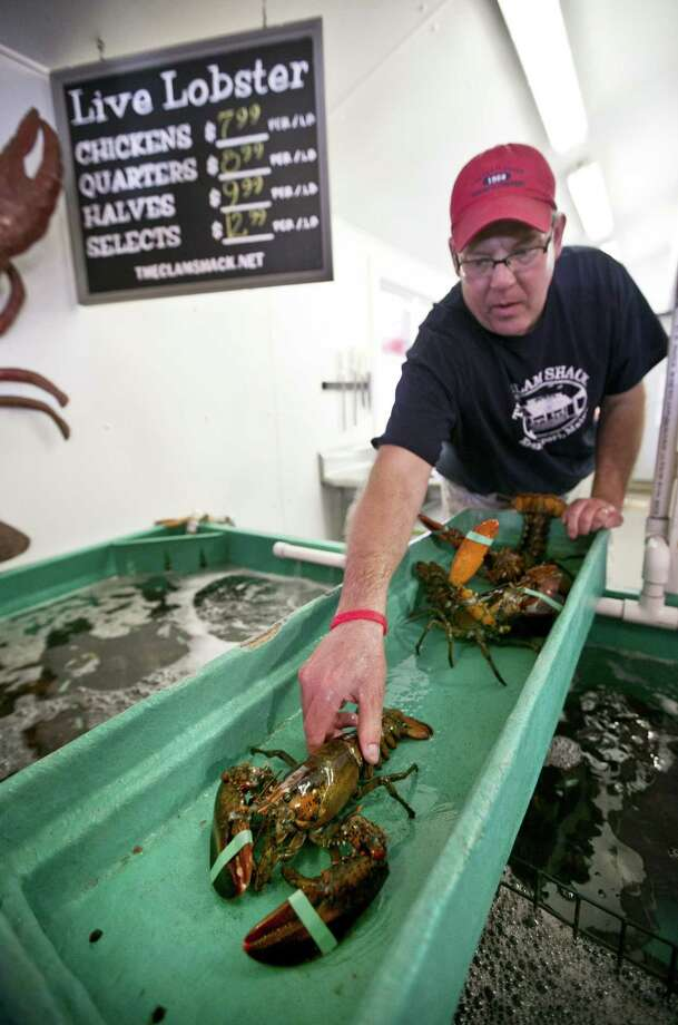"Steve Kingston, owner of the Clam Shack in Kennebunkport, Maine, sorts lobsters at his restaurant, Friday, June 12, 2015. One pound ""chicken"" lobsters sell for $7.99 per pound while two-pound ""selects"" sell for $12.99. (AP Photo/Robert F. Bukaty) Photo: AP / AP"