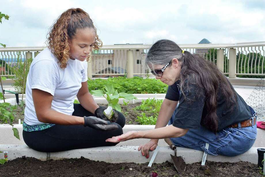 Larissa Gionfriddo, director of outreach and advocacy for MARC, plants vegetable seeds with MARC participant Mary H. at the Community Health Center's rooftop garden Tuesday afternoon. Photo: Catherine Avalone — The Middletown Press