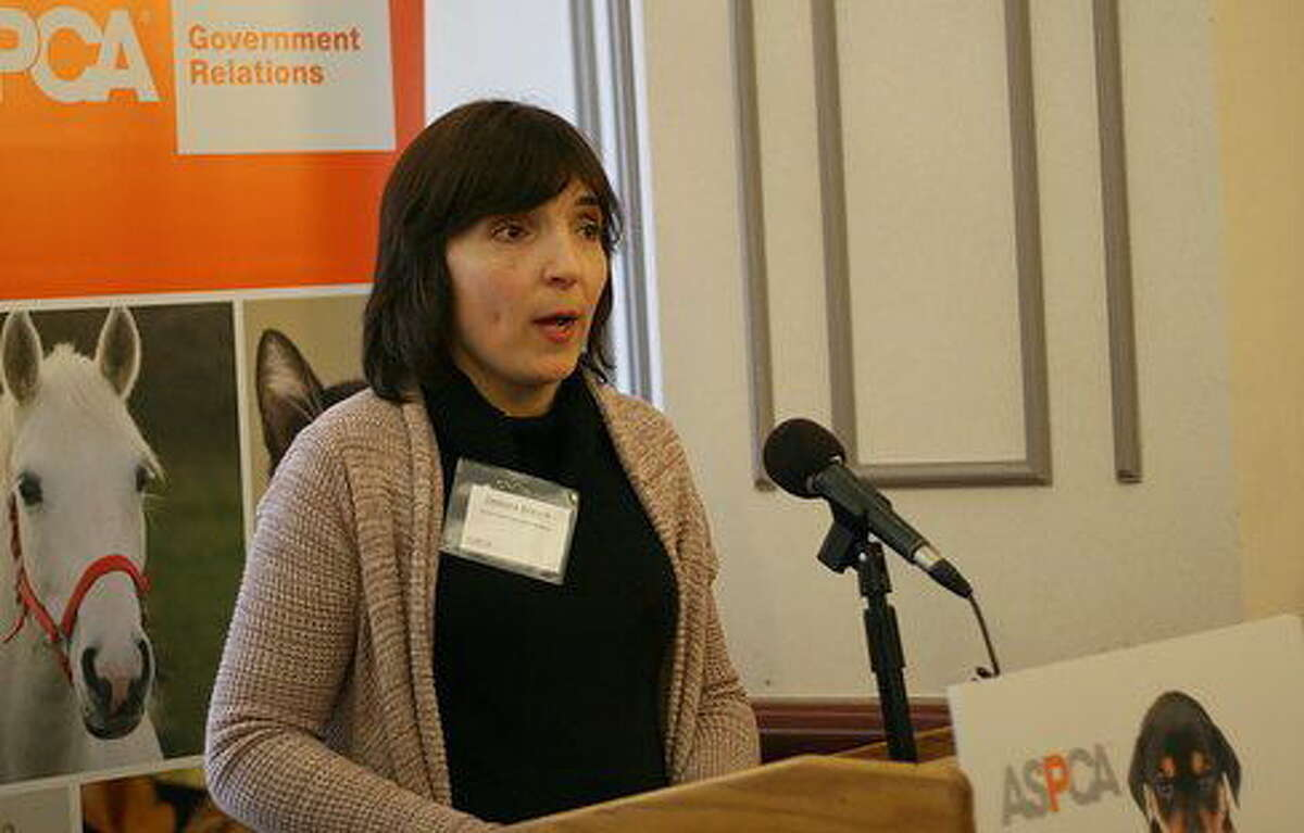 Debora Bresch, a lawyer with the American Society for the Prevention of Cruelty to Animals. Hugh McQuaid/CT News Junkie