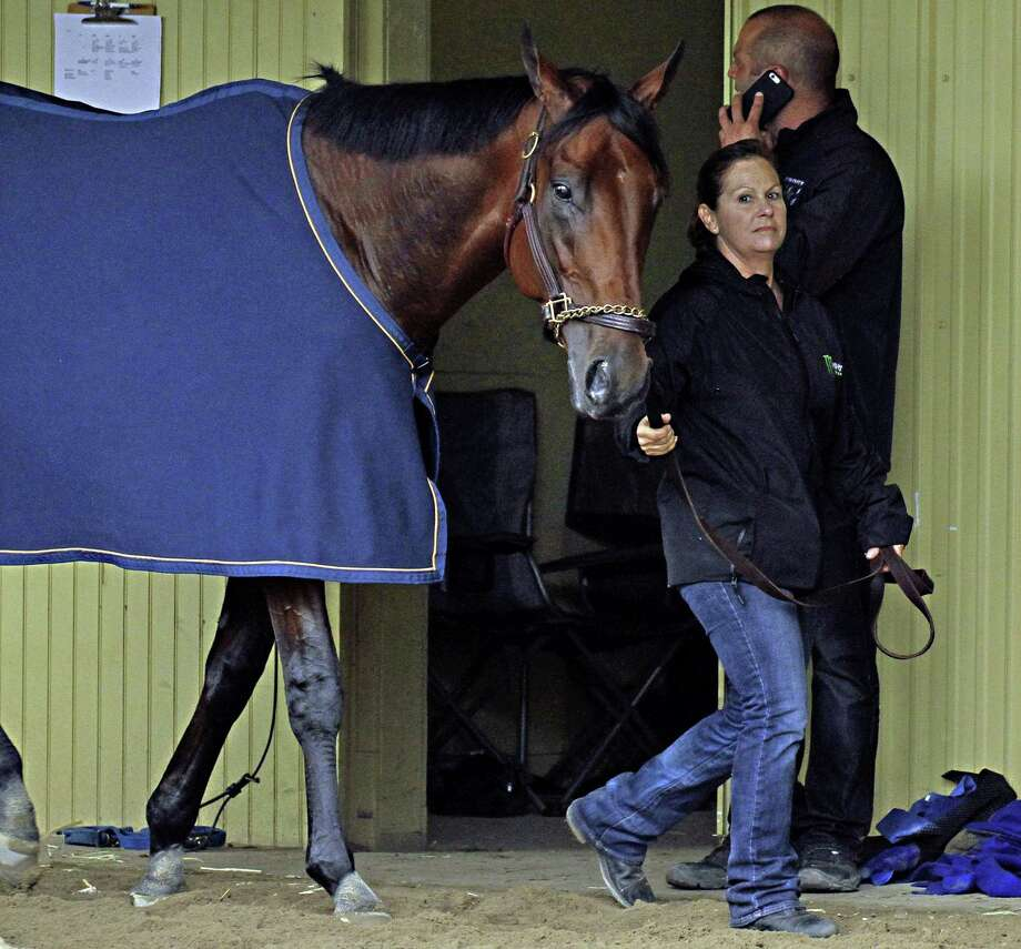 Exercise rider Dana Barnes walks American Pharoah in the barn after a morning gallop Friday at Belmont Park in Elmont, N.Y. Photo: Garry Jones — The Associated Press  / FR50389 AP