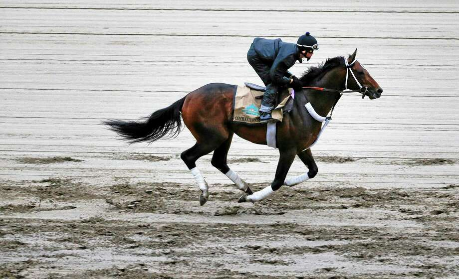 Commanding Curve heads down the front stretch with exercise rider Emerson Chavez up during a workout Thursday at Belmont Park in New York. Commanding Curve will be one of ten challengers looking to spoil California Chrome's bid at a Triple Crown when they race in the 146th running of the Belmont Stakes on Saturday. Photo: Julie Jacobson — The Associated Press  / AP