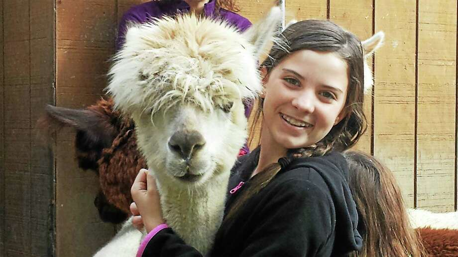 Contributed photoMegan and Clarice await guests at the alpaca farm, which will hold a holiday open house in December. Photo: Journal Register Co.