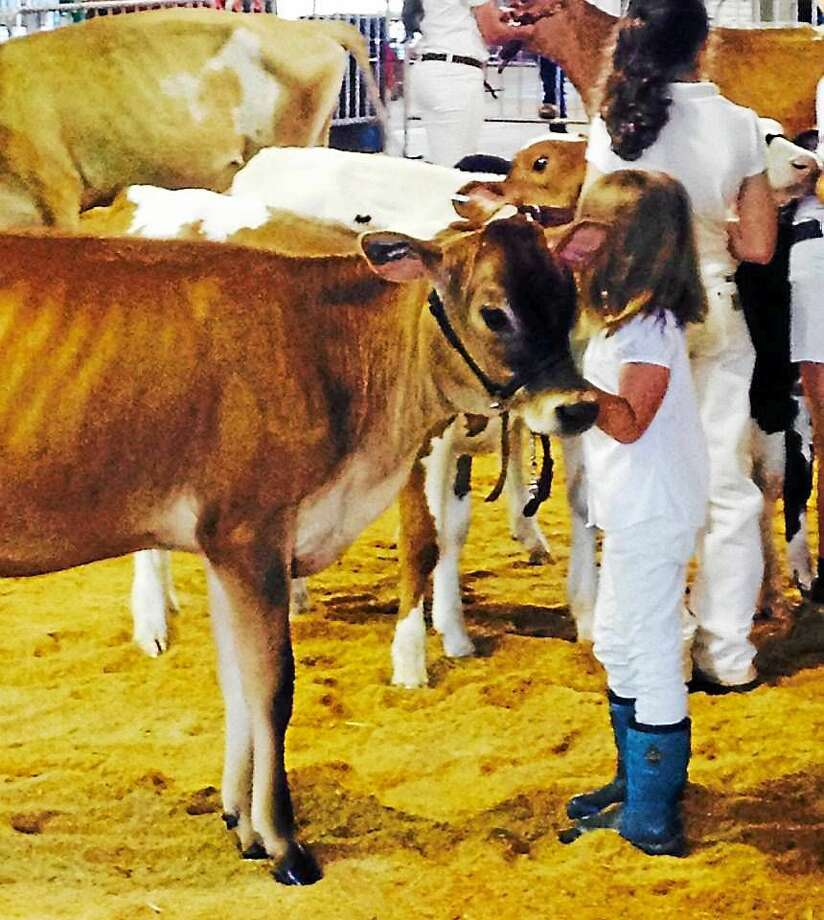 A young 4-H member holds her calf during a judging session at last y ear's event. Photo: Journal Register Co.