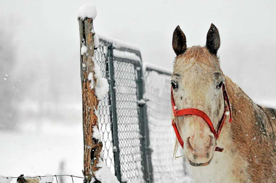 A bright red bridle gives a splash of color to a horse on a snowy day in Durham in this Feb. 3 photo. Photo: Catherine Avalone — The Middletown Press  / TheMiddletownPress