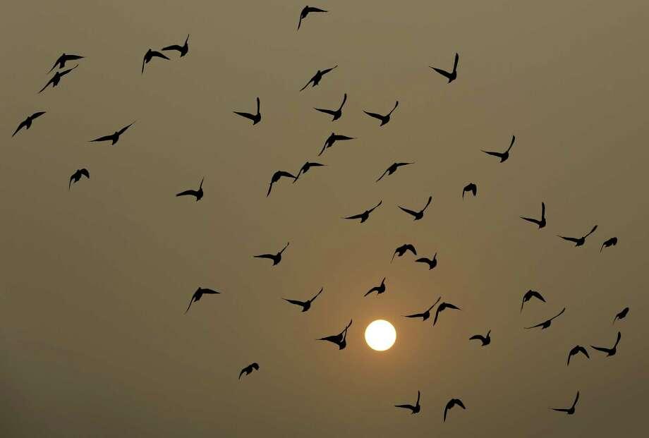 Birds fly as the sun sets through haze in Beijing Wednesday, Nov. 19, 2014. Photo: AP Photo/Andy Wong  / AP