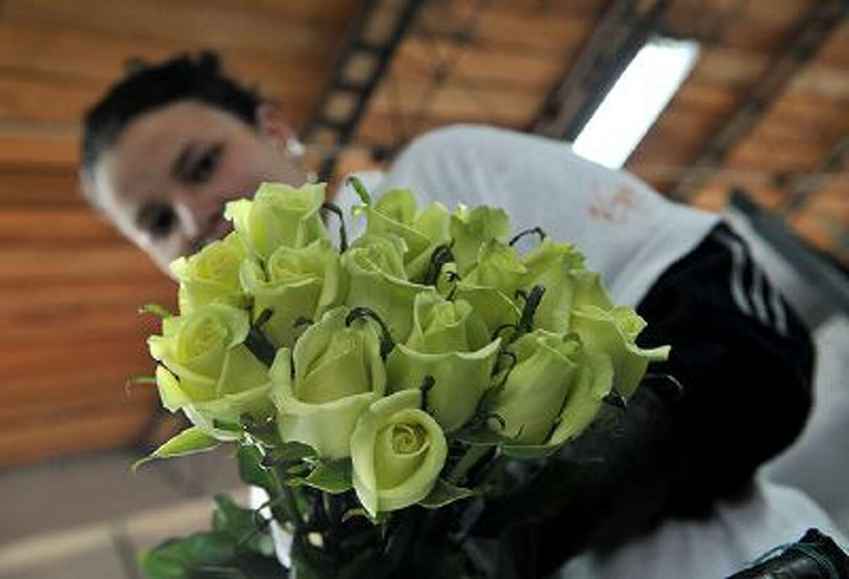 A woman prepares bouquets of yellow roses on February 11, 2011, at a flower farm in Cajica, near Bogota, Colombia.