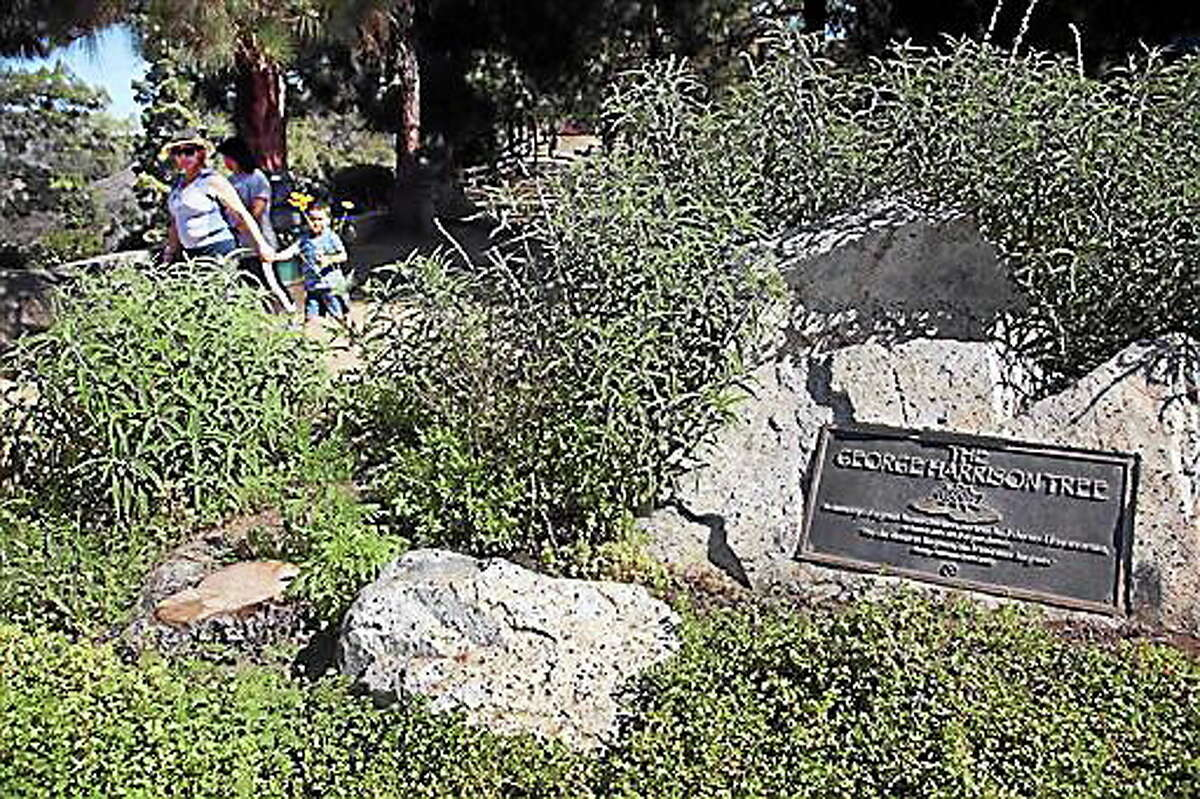 Visitors walk past a plaque marking the George Harrison Tree, in Griffith Park on Tuesday, July 22, 2014. The tree planted in Los Angeles to honor former Beatle George Harrison has been killed by beetles. The pine grew to more than 12 feet tall before succumbing to a bark beetle infestation and removed last month. (AP Photo)