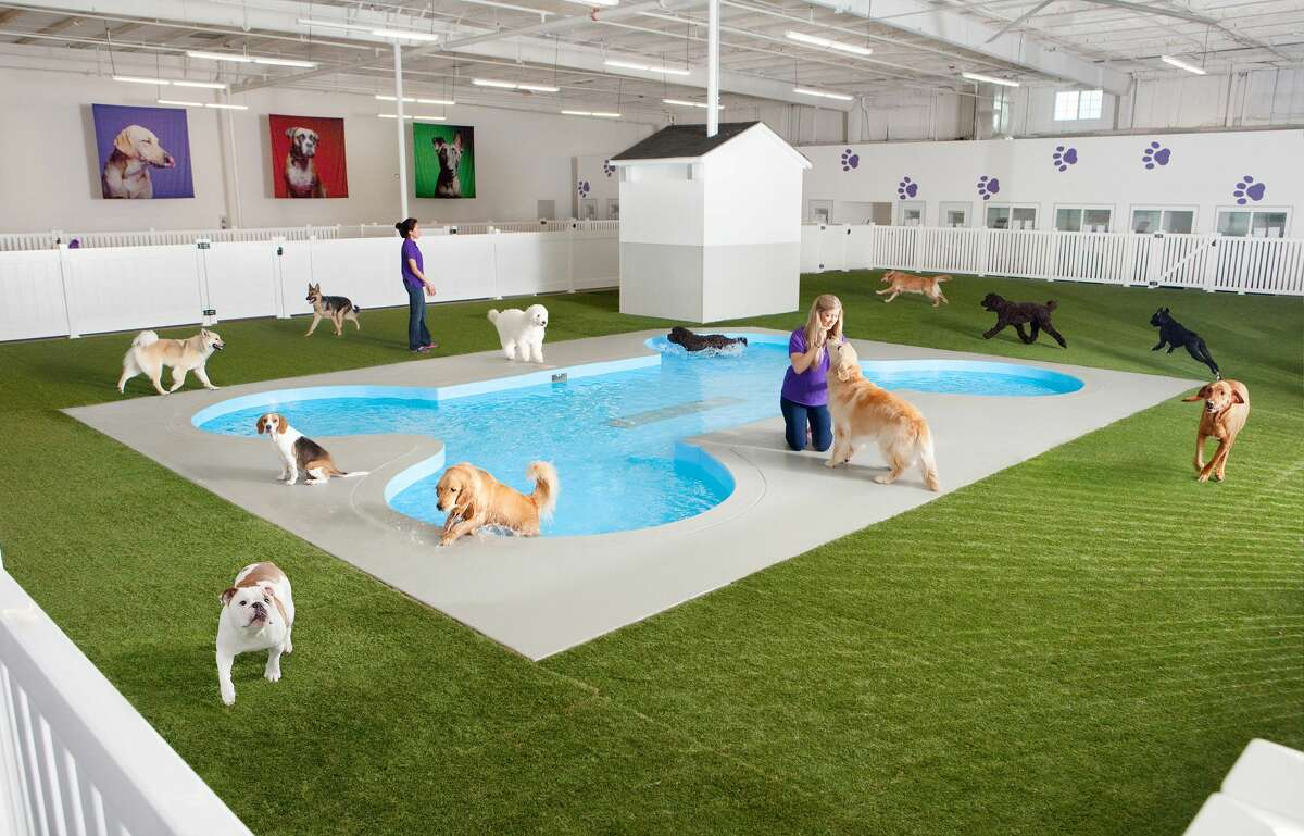 This undated artist rendering provided by Classic Communications courtesy of ARK Development depicts Paradise 4 Paws, a holding area for dogs in a new luxury terminal at New York's John F. Kennedy International Airport.