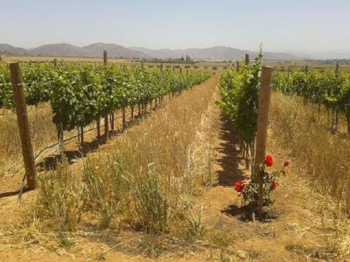 The vineyards at Finca La Carrodilla
