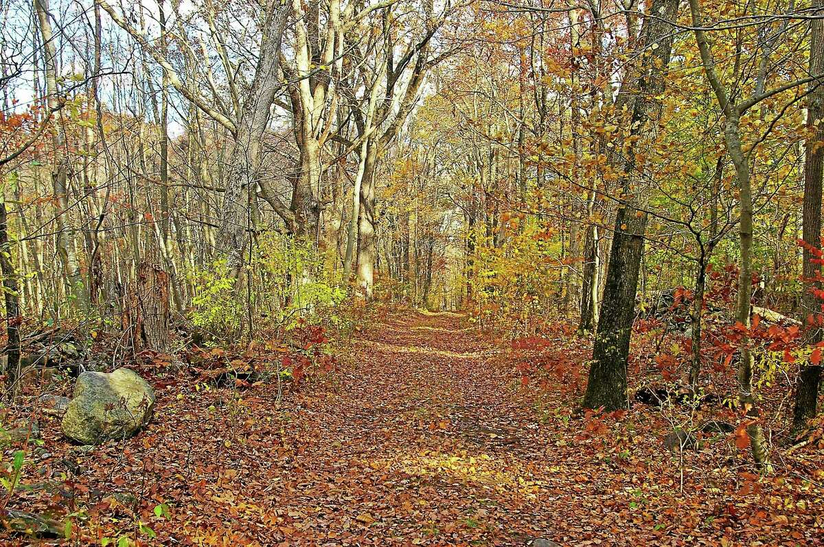 The Lena Property is one of two the of East Haddam wants to purchase for open space. It is an undeveloped, wooded parcel located within the federally designated Eightmile River Wild and Scenic Watershed.