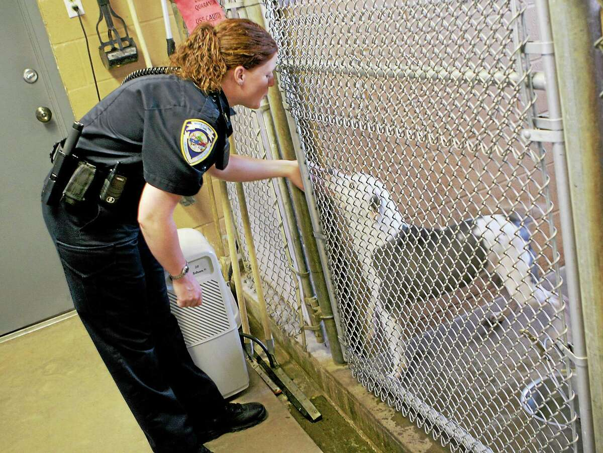 In this archive photograph, pit bull mix housed at the Portland Animal Control Shelter, nuzzles up to Middletown Animal Control Officer Gail Petras' hand at the shelter, which holds animals for Middletown, Portland and Cromwell's animal control departments.
