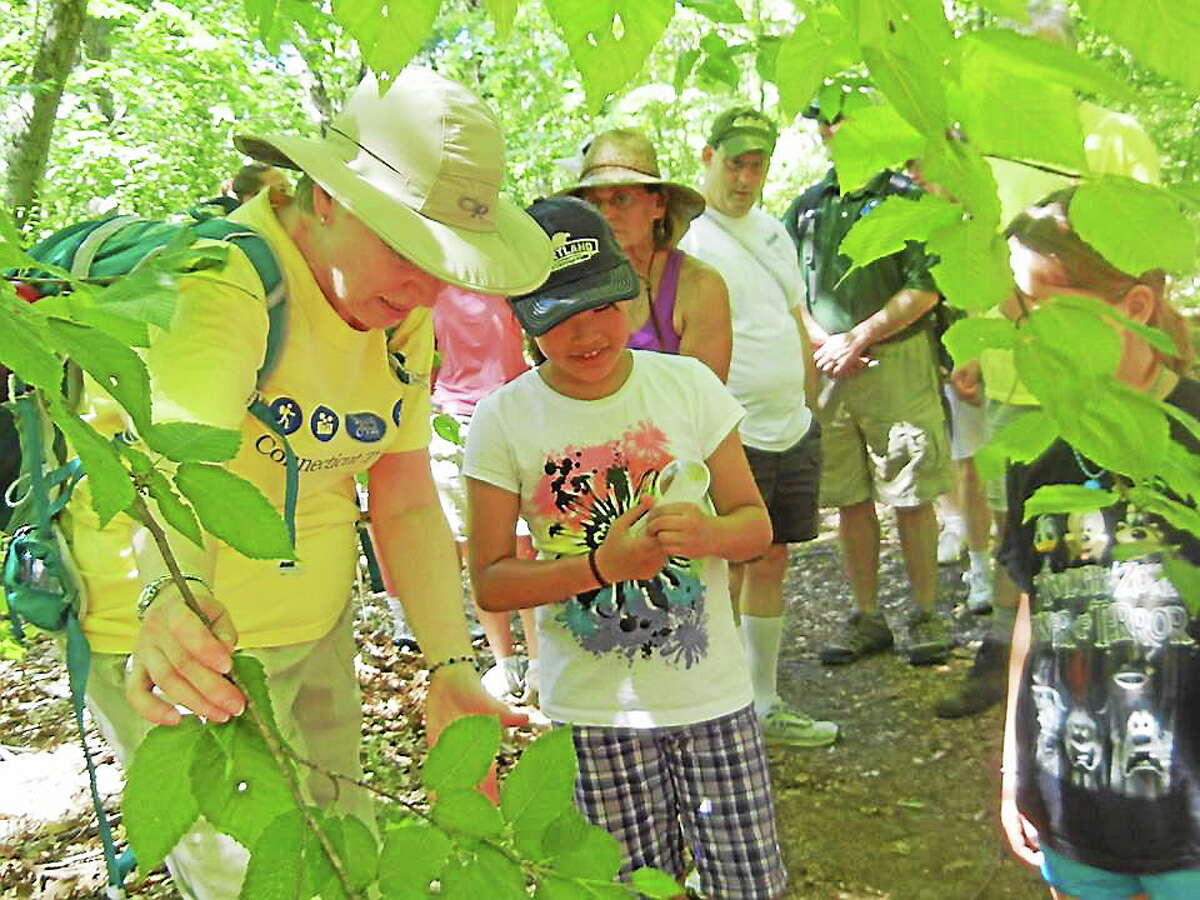 The Rockfall-based Connecticut Forest & Park Association is hosting several free New England Trail WalkCT Family Rambles over the next four weeks.