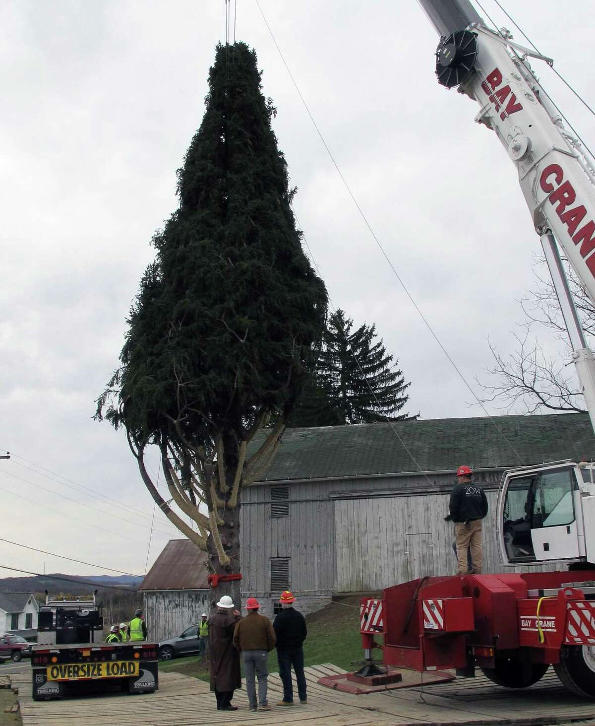 An 85-foot, 13-ton Norway spruce, which will serve as Rockefeller Center's Christmas tree this year, is prepared to be cut down Wednesday morning Nov. 5, 2014 in Bloomsburg, Pa. ahead of the 155-mile journey to midtown Manhattan. The tree will be illuminated for the first time on Dec. 3 in a ceremony that's been held since 1933. The tree came from the home of Dan Sigafoos and Rachel Drosdick-Sigafoos. (AP Photo/Michael Rubinkam)