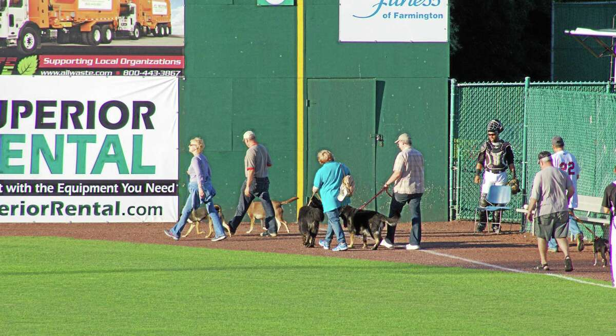 Bark in the Park night at the New Britain Rock Cats is when fans bring their pets and parade their pooches before the first innings.