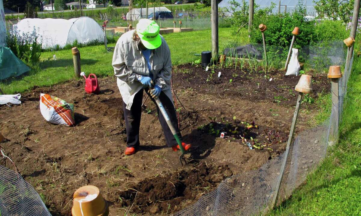 This May 14, 2014 photo shows a gardener preparing the soil for planting in her designated plot at the South Whidbey Demonstration and Community Garden near Langley, Wash. She added fertilizer and some other soil amendments before putting more cool-season vegetables into the ground.