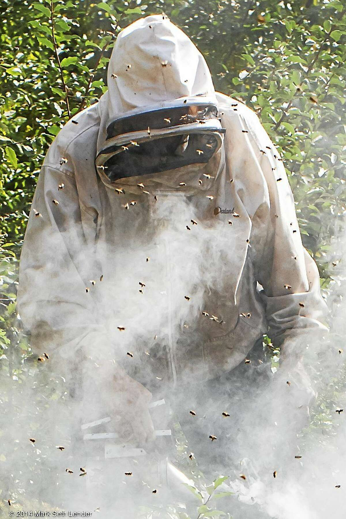 Jim Clinton calming an angry hive with smoke.