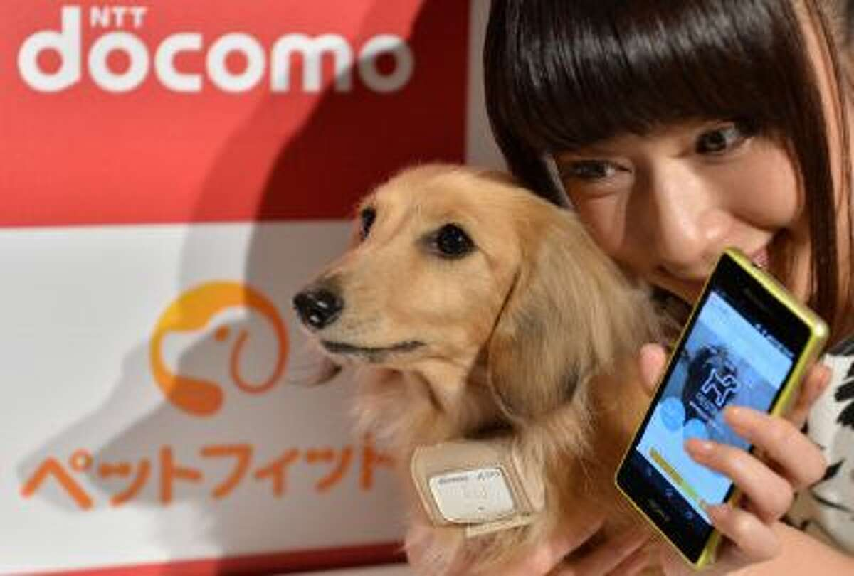 """A dog (L) wears a """"Petfit tag"""" equipped with 3G and Bluetooth from Japan's largest mobile phone carrier NTT Docomo during a press briefing in Tokyo on February 13, 2014. NTT Docomo announced it will start the communication service """"Petfit"""" in March allowing owners to manage the health and locate the whereabouts of their dog through a tag attached to a collar from a PC or smart phone. AFP PHOTO / KAZUHIRO NOGI (Photo credit should read KAZUHIRO NOGI/AFP/Getty Images)"""