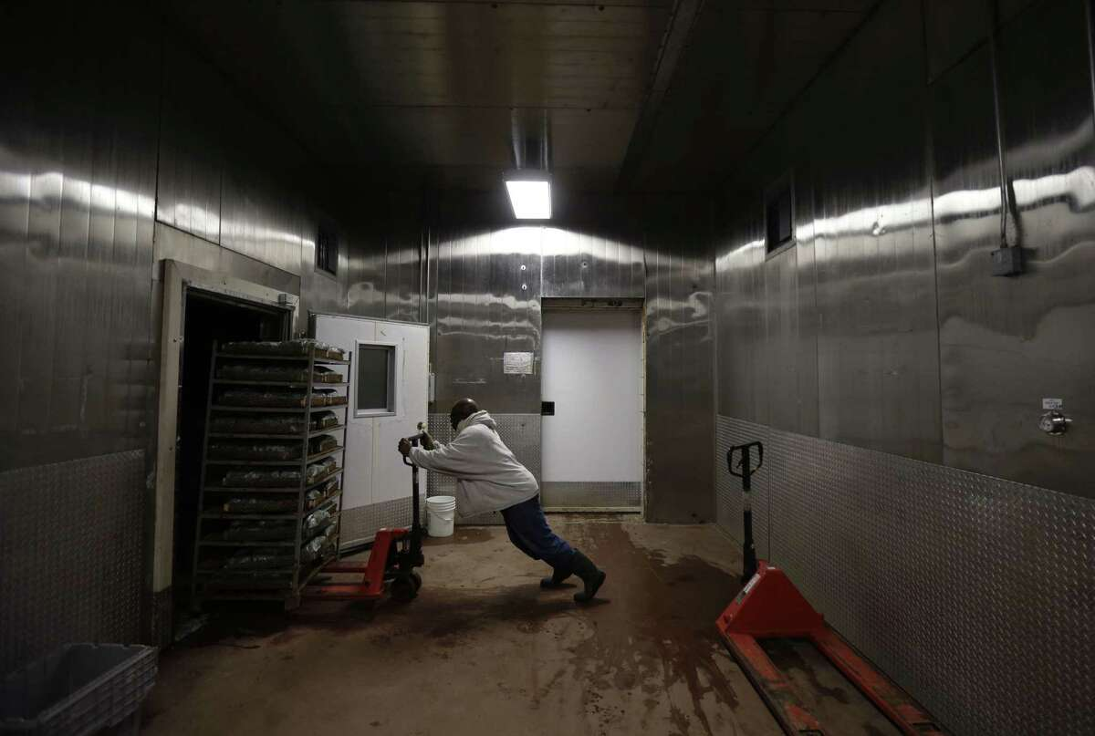 An inmate pushes pushes produce into a cooler inside a processing plant at the Louisiana State Penitentiary in Angola, La.
