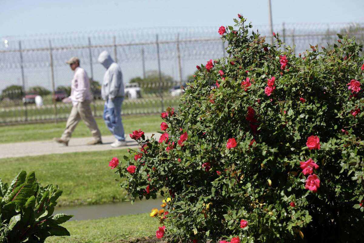 Inmates walk past blooms planted by other inmates at the Louisiana State Penitentiary in Angola, La.