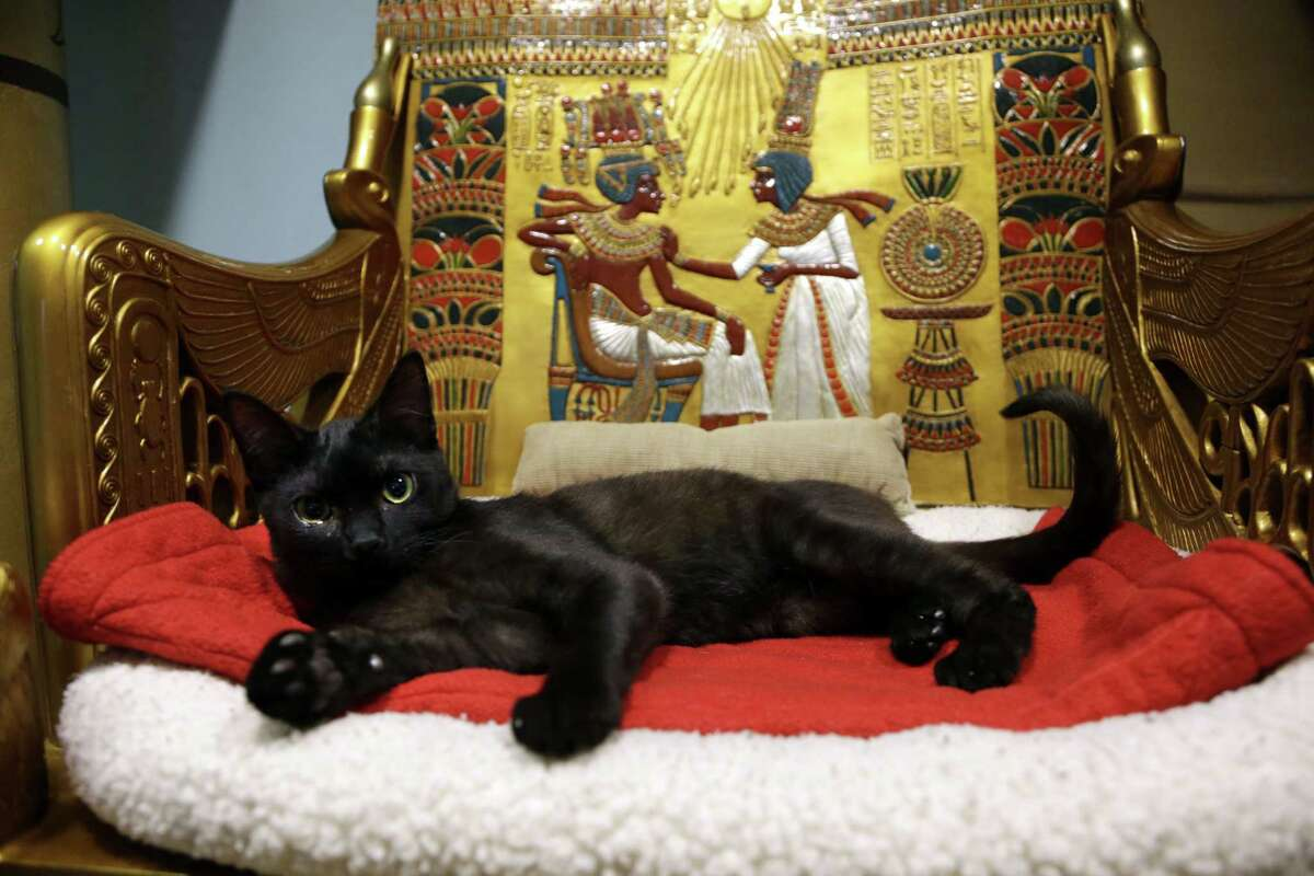 In this Dec. 18, 2014 photo, a cat rests on the throne bed in the King Tut-theme cat playroom at the Oregon Humane Society in Portland, Ore. Modern-day cats have not yet become associated with deities as they were in ancient Egypt, but the Internet has gotten them a little closer.