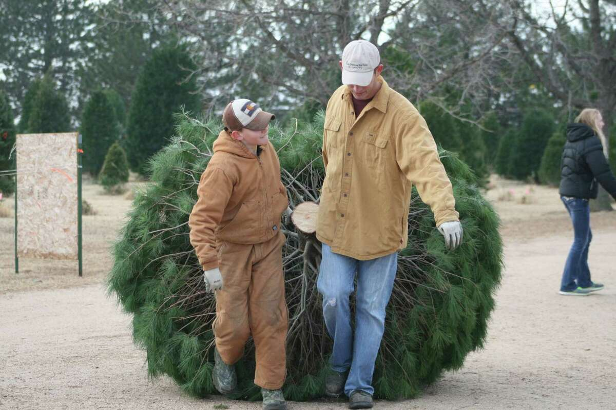 Elijah and Joel Delp pull in a Christmas tree for a customer on Dec. 13.