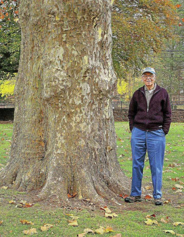 Tree historian Ed Richardson, 90, is shown next to a London Plane, the fourth largest type of tree in the state, at the Indian Hill Cemetery on Washington Street in Middletown. Photo: Aysha Mahmood — Special To ThE Press