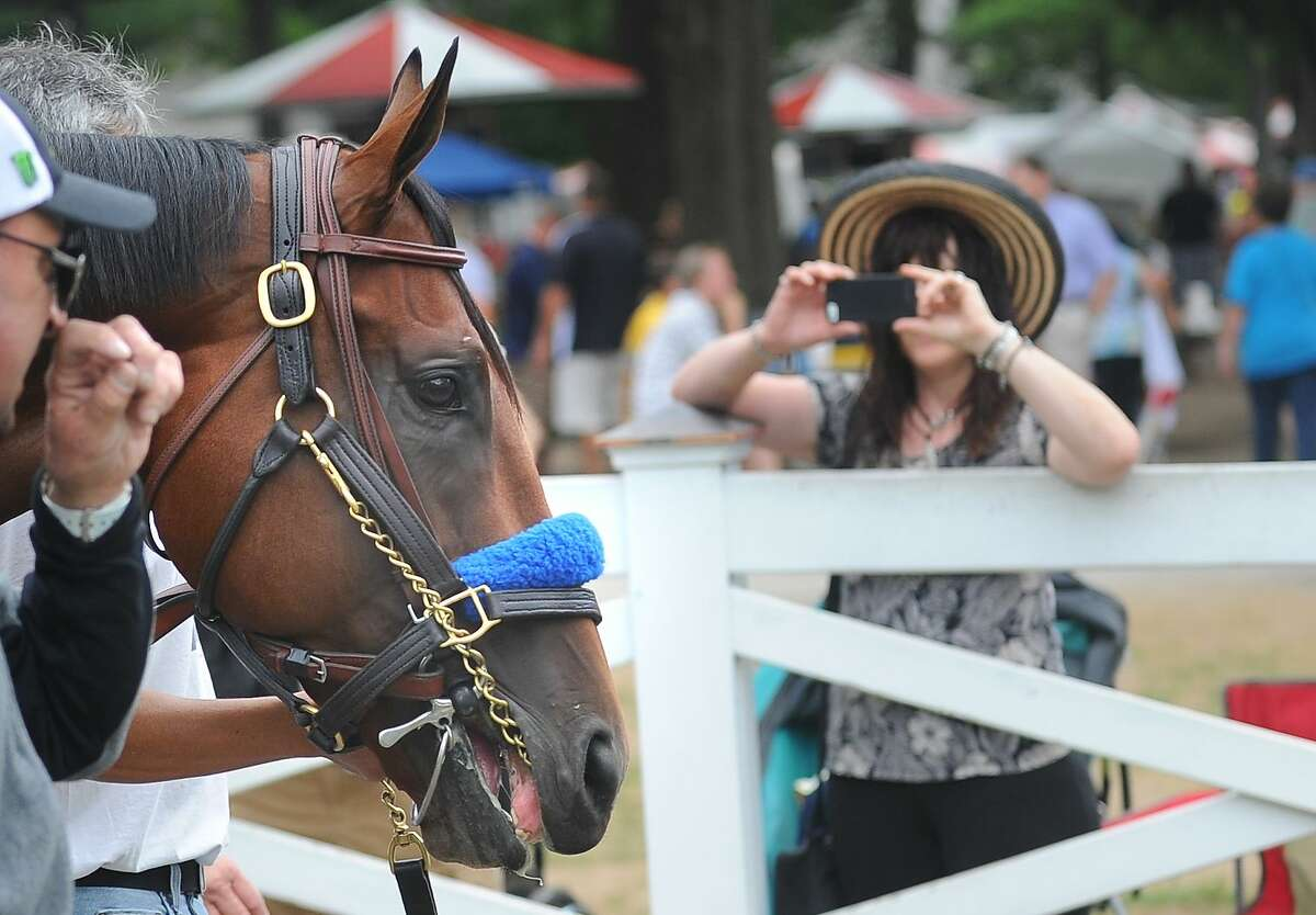 American Pharaoh is walked around the paddock Thursday morning at Saratoga Race Course in Saratoga Springs, N.Y.