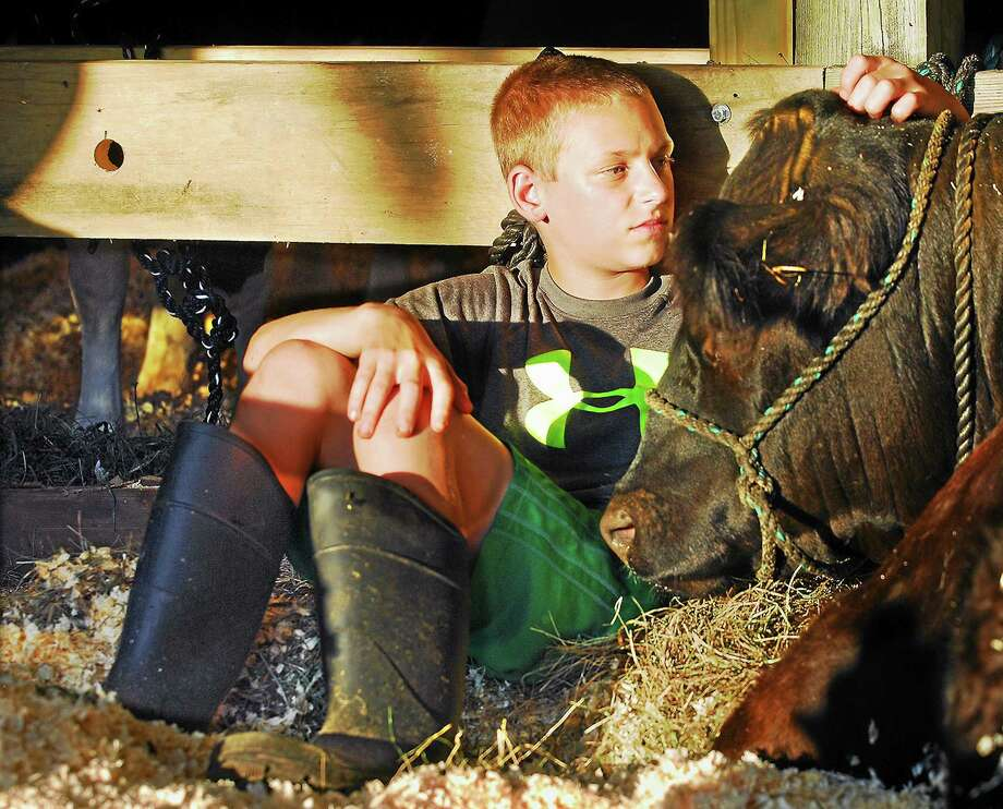 Owen Duff, 13, of OK Corral in Bozrah snuggles with Kemba, a galloway from Serenity Farm in Lebanon at the Haddam Neck Fair in this file photo. Photo: Catherine Avalone - Middletown Press File Photo