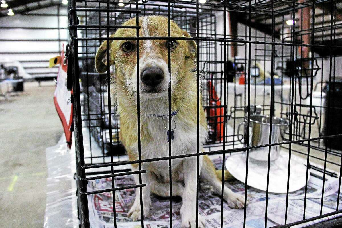The adoption event will be held from 10 a.m. to 4 p.m. on Saturday and Sunday at the Durham Fairgrounds.
