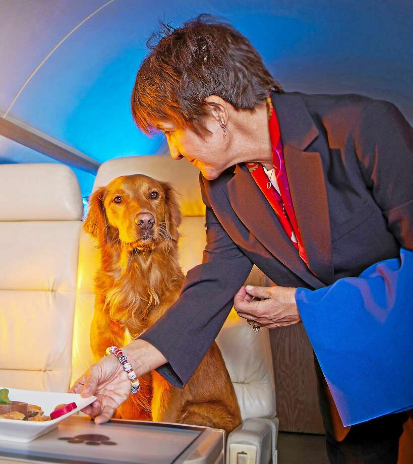 The rebound in U.S. business-aircraft trips in 2014 means more dogs and cats are taking wing as well, toted by customers able to afford flights that may top $60,000. (Photo via Sit 'n Stay Global) Photo: BLOOMBERG NEWS / BLOOMBERG NEWS