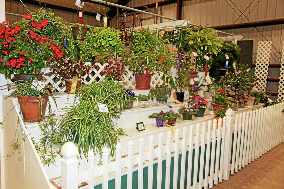Gardeners from throughout the area enter their flower arrangements at the Durham Fair hoping to collect a myriad of cash prizes and other awards. Photo: Len Baginski  / Leonard J. Baginski 44R Tuttle Road Durham CT 06422 860-3493305