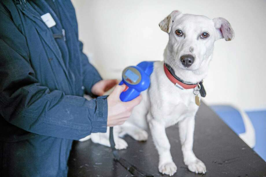 File photo Many dog owners microchip their pets. Photo: Ap / Blue Cross