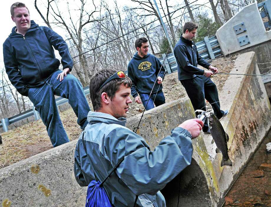 In this March 25 file photo, Connor Stevenson looks at a Rainbow Trout he caught as he and fellow Quinnipiac University sophomores were fishing in the Mill River near campus. Fishing season has not started yet, so the friends were catching and releasing all their fish. Behind Stevenson, left to right, are: Reid Warnock, Ben Czuchra and Craig Standish. Photo: Peter Casolino — New Haven Register FILE PHOTO